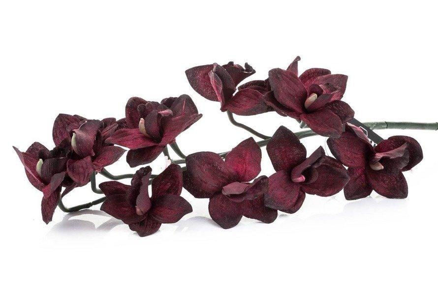 Orchidea bordowa Aluro